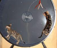 How to Build a Cat Exercise Wheel, Part 1   Jill Yotz