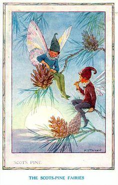 Scots Pine - Flower Fairies book by Marion St John Webb, 1923