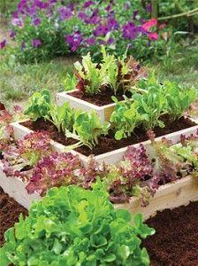 Growing Vegetables and Herbs in Shade | Veggie Gardener