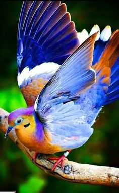 New Colorful Bird Wings God Ideas Kinds Of Birds, All Birds, Cute Birds, Pretty Birds, Exotic Birds, Colorful Birds, Exotic Pets, Beautiful Creatures, Animals Beautiful