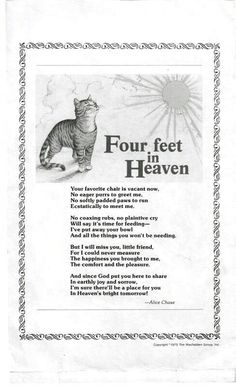 Bridge Photo: This Photo was uploaded by Find other Rainbow Bridge pictures and photos or upload your own with Photobucket free im. Crazy Cat Lady, Crazy Cats, I Love Cats, Cute Cats, Cat Quotes, Animal Quotes, Souvenir Animal, Pet Poems, Cat Loss Poems