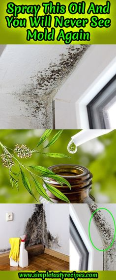 \'Spray This Oil and You Will Never See Mold Again...!\' (via Simply Tasty Recipes)