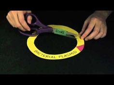 MIT+K-12 Video - Biology: Genetic Engineering....might need this next week