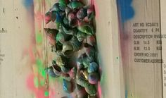 Coloured shells on a cartboard box