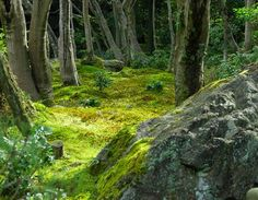 ferns and mosses - Google Search