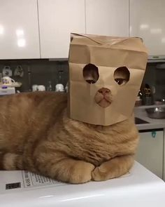 25 pictures of a bit strange but really funny cats - Таня Ð . - 25 pictures of a bit strange but really funny cats – Таня Бар – - I Love Cats, Crazy Cats, Cool Cats, Weird Cats, Cute Funny Animals, Cute Baby Animals, Funny Cats, Humorous Cats, Funny Cat Faces