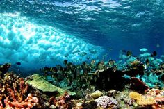 Coral reefs' physical conditions set biological rules of nature