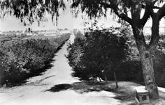 Circa 1885 view of Colorado Boulevard, then named Colorado Street, looking east toward Pasadena's central business district. Courtesy of the USC Libraries - California Historical Society Collection. California Location, Los Angeles California, Southern California, Usc Library, Classic Film Noir, Photo Record, Hollywood Homes, Hollywood Boulevard, California History