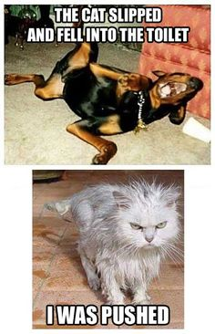 Dog Memes To Prove Whos The Boss - Funny Animal Quotes - - 30 Funny Cat Vs. Dog Memes To Prove Whos The Boss Lovely Animals World The post 30 Cat Vs. Dog Memes To Prove Whos The Boss appeared first on Gag Dad. Funny Animal Quotes, Cute Funny Animals, Funny Animal Pictures, Cute Baby Animals, Animal Humor, Hilarious Pictures, Funny Animal Sayings, Funny Photos, Funniest Animals