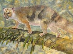 Extinct 'Micro Lion' Is Named For Sir David Attenborough : The Two-Way : NPR