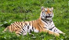 Image result for wild animals pictures Wild Animals Pictures, Animal Pictures, Image, Pictures Of Wild Animals, Pet Pictures, Animal Photography, Animal Paintings