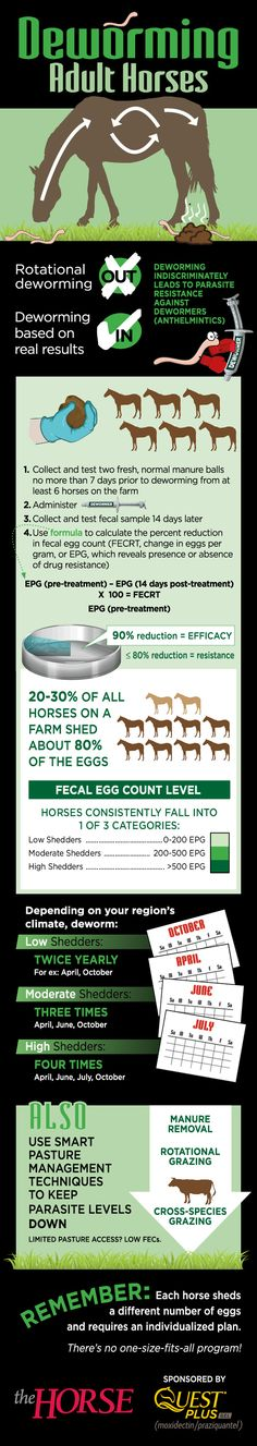 Infographic: Deworming Adult Horses - TheHorse.com | Are you still using rotational deworming for your horses? Learn a new, healthier way to manage internal parasites in this visual guide
