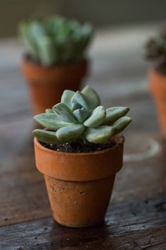 10 Things Nobody Tells You About Succulents
