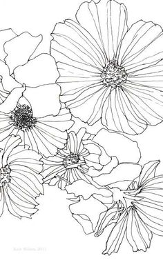 Flower sketches: Cosmos and sweet pea