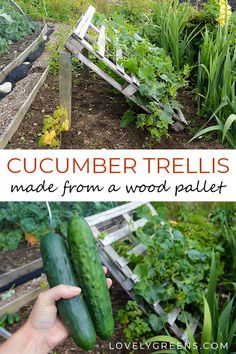 pallet garden DIY Pallet Cucumber Trellis -- Re-purpose a wood pallet into a quick and sturdy DIY cucumber trellis -- no tools required. It gives space for the plants to grow and makes harvesting an easy task