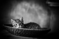Kitty 1 by Fabian Lambeck on 500px
