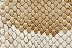 Snake Skin - Yahoo Image Search Results