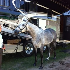 Andalusian horse with an Equine Motorcoach.