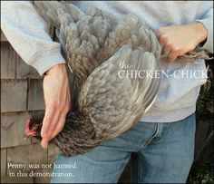 Euthanasia for Backyard Chickens from The Chicken Vet - I hope I never have to do this, but good to know? Portable Chicken Coop, Best Chicken Coop, Chicken Chick, Chicken Coop Plans, Building A Chicken Coop, Chicken Lady, Best Egg Laying Chickens, Baby Chickens, Keeping Chickens