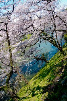 shinichiro saka - tokyo spring