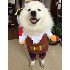 #Halloween is right around the corner! Do you have a good #costume for your #pet? #pirate #dogcostume #dog #cat