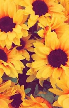 Flowers Yellow Wallpaper Iphone 56 Ideas For 2019 Cute Backgrounds, Iphone Backgrounds, Cute Wallpapers, Wallpaper Backgrounds, Pretty Wallpapers Tumblr, Aztec Wallpaper, Phone Wallpapers Tumblr, Tumblr Wallpaper, Nature Wallpaper