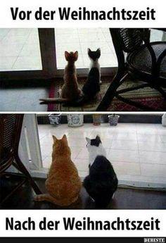 New Memes Humor Chistosos Chistes Ideas Funny Cats, Funny Animals, Cute Animals, New Memes, Funny Memes, Funny Quotes, Memes Super Graciosos, Image Facebook, Tierischer Humor