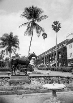 Citation the eighth American Triple Crown winner stands on sentry duty at the centre of the lily pool near the entrance of Hialeah Park's clubhouse. Provided by the State Archives of Florida. Old Florida, Vintage Florida, State Of Florida, Florida Usa, South Florida, Hialeah Park, Hialeah Florida, Miami Images, Magic City