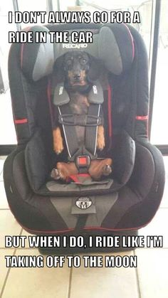 .Riding in style. Safety first. (uhmmm, I don't see this happening with our 2 doxies, but I admit I did have to chuckle!).