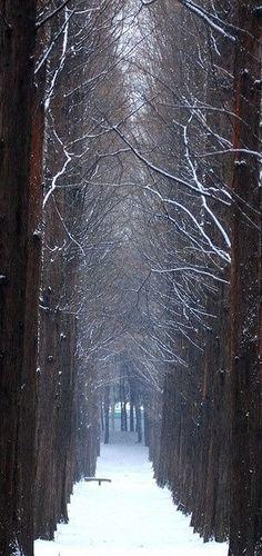 A Quiet Winter's Walk Chills my Bones.