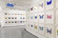 From Paul Stolper Gallery, Damien Hirst, The Souls III - Imperial Purple/Hazy Gold/Westminster Blue 2010 3 colour foil block on Arches 88 ar… Meaning Of Science, Damien Hirst, Green Butterfly, Westminster, Prints For Sale, Installation Art, Contemporary Artists, Blue And Silver, Fine Art Prints