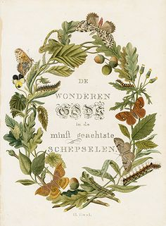 Decorative Title Page from Jan Christiaan Sepp Butterflies and Moths Prints 1762 Antique Illustration, Plant Illustration, Floral Illustrations, Botanical Illustration, Botanical Drawings, Botanical Prints, Antique Prints, Vintage Prints, Sibylla Merian