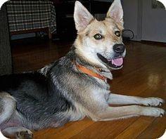 Washington, DC - German Shepherd Dog Mix. Meet Maya.
