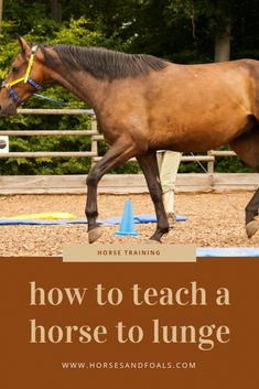 Lunging is a good tool for teaching horses to respond to your physical and verbal cues. It is also an excellent way to help your horse burn off steam. When you start your horse off with lunging, you can refresh his memory, rebuild your working relations Horse Training Tips, Horse Tips, Lunging Horse, Reining Horses, Appaloosa Horses, Horse Exercises, Training Exercises, Verbal Cues, Riding Lessons