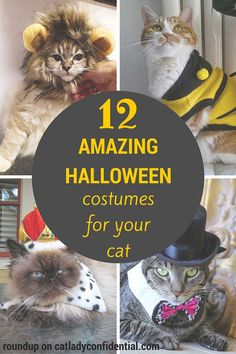 For those with a death wish...12 Amazing Halloween Costumes For Your Cat