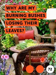 Does Wheat Straw Make Good Mulch? There are many types of mulch that serve different purposes, some of which work better with some plants than others. Wheat straw mulch is an excellent mulch for vegetable crops, though any straw mulch will also work. Lactuca Sativa, Foxtail Fern, Get Rid Of Ants, Indoor Greenhouse, Indoor Gardening, Greenhouse Ideas, Organic Gardening, Aquaponics Greenhouse, Texas Gardening