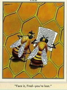 20 Best Bee Nice Images Bees Bee Illustration Bee Tattoo