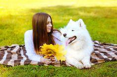 Portrait happy pretty woman and white Samoyed dog having fun Royalty Free Stock Photos