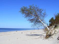 morze plaża krajobraz bałtyk trójmiasto - Google Search