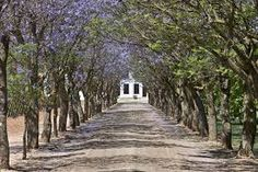 bonnievale - Google Search Westerns, Cape, Country Roads, Google Search, Mantle, Cabo, Coats
