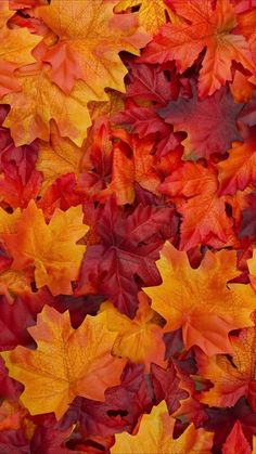 Nice Tips Fall Aesthetic Wallpaper : Herbstfarben - Herbst - Wallpapers Designs Orange Aesthetic, Autumn Aesthetic, Backgrounds Wallpapers, Aesthetic Wallpapers, Fall Backgrounds Iphone, Pretty Wallpapers, Iphone Wallpapers, Orange Tapete, Iphone Wallpaper Herbst