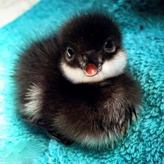 The Staten Island Zoo has announced that its cute new baby is ... a duck. #zoo #cuteanimals