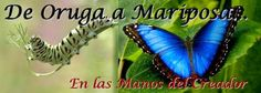 """REFLEXIONES PARA VOS: """"DE ORUGA A MARIPOSA"""" Lea la reflexión en el blog: http://reflexionesparavos.blogspot.com/2015/05/de-oruga-mariposa.html?spref=tw #reflexionesparavos"""
