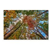 "Found it at Wayfair - ""New York Fall-I"" by David Ayash Photographic Print on Wrapped Canvas"