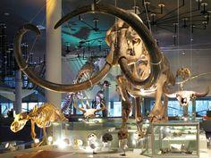 Dino's kijken in Naturalis