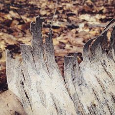 Berkenbast. #mooigooi by boswachter