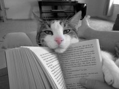 Book and cat.