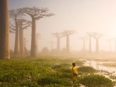 Picture of a woman and baobab trees in Madagascar