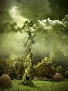 Fairy night, Beanstalk.