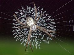 The Spiders That Decorate Their Own Webs ~ The Ark In Space